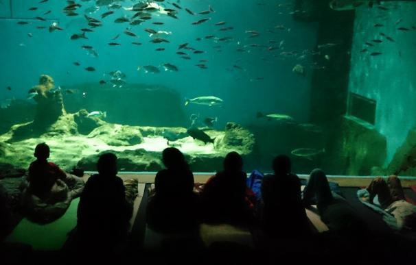 """El acuario prevé cerrar """"a fin de mes"""" la operación con City Sightseeing, Looping y Soprea para su nueva etapa"""