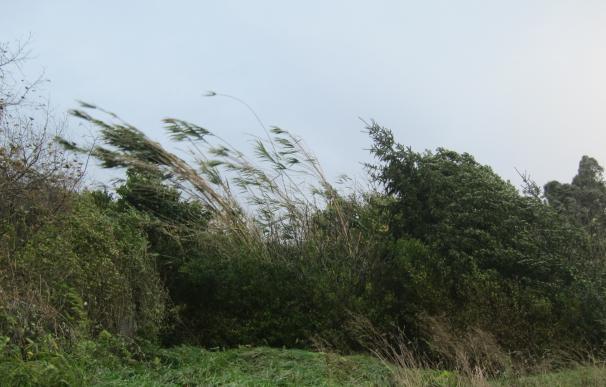 El temporal de viento se retrasará hasta esta madrugada