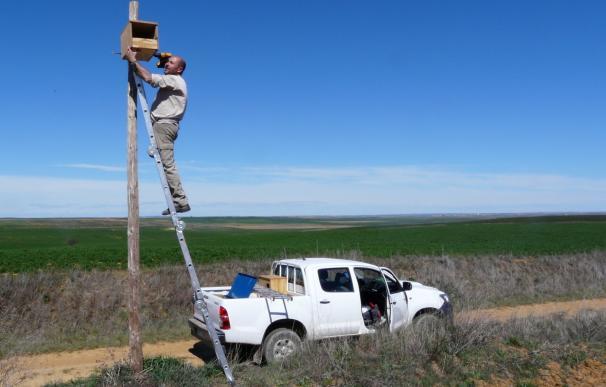 Grefa coloca 2.000 nidales en Castilla y León para aves rapaces que cazan topillos