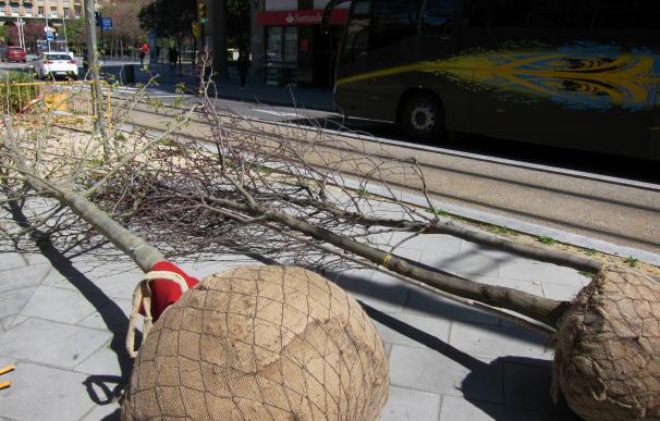 La renovación del arbolado del Campus de San Francisco incluirá la plantación de 214 ejemplares