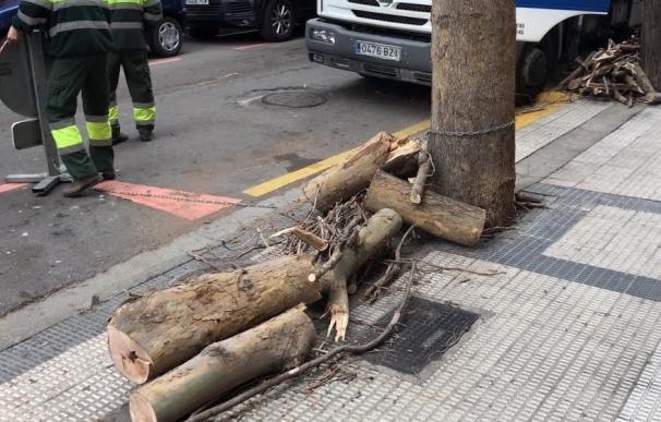 El PP exige un plan de intervención y poda que garantice la seguridad tras la caída de una rama en el Centro