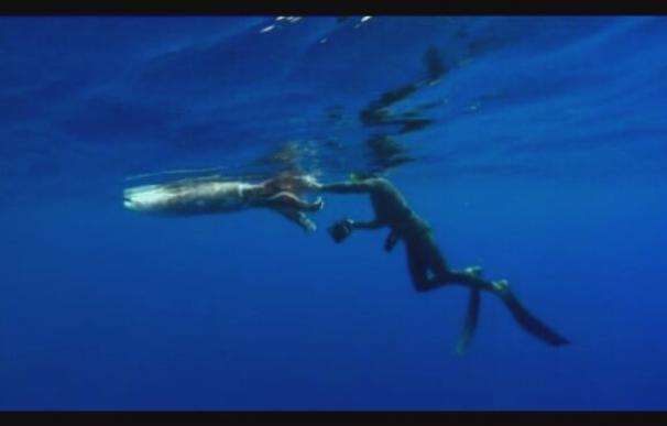 Hallan un calamar gigante flotando en aguas de Tenerife