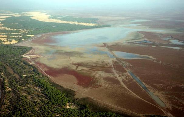 La colonia de morito en Doñana, recuperada en 1996, rebasa las 4.000 parejas