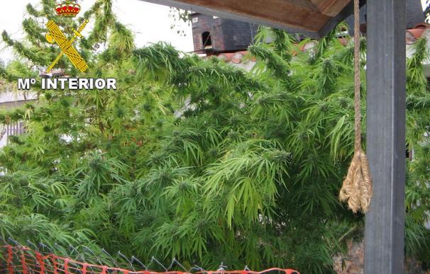 Apoyan el autocultivo de cannabis para reducir el narcotráfico y generar impuestos