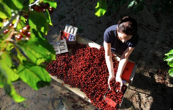El Valle del Jerte celebra dos meses de actividades en torno a la cereza