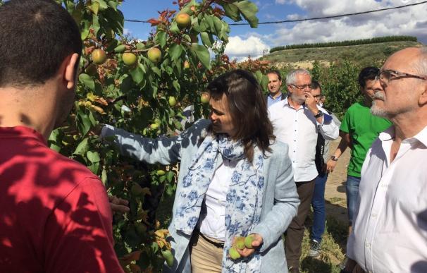 El granizo daña 3.340 hectáreas de fruta dulce y 2.150 de cereales en Lleida