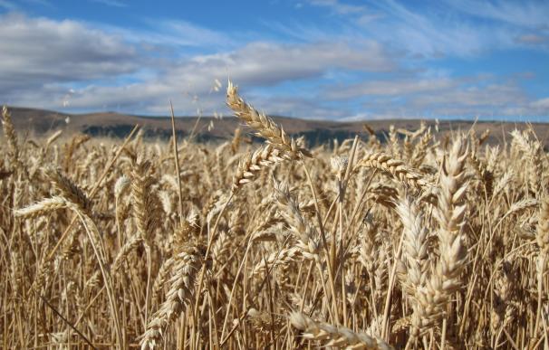 CaixaBank y el BEI financiarán con 200 millones a pymes agroalimentarias