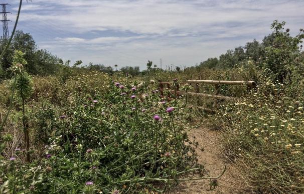 La CHG propone a la Mancomunidad del Aljarafe asumir el Riopudio durante un año y ultima el encargo a Tragsa