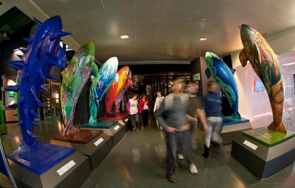 Uno de cada tres varamientos de cetáceos está relacionado con la actividad humana