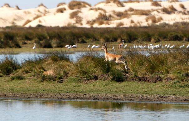 Una nueva herencia mantiene viva la tradición de donaciones a Doñana