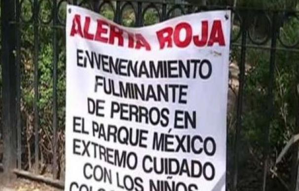 La Policía de Ciudad de México investiga el caso de envenenamiento de perros en el parque de La Condesa