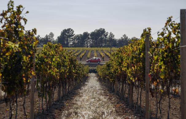 La Carretera del Vino celebra su primer aniversario con 115.000 visitantes
