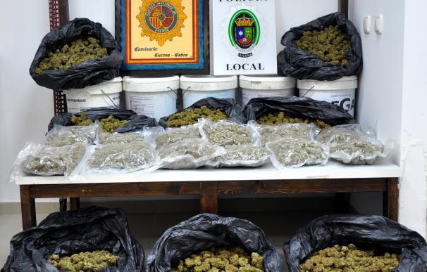 Detienen en Lucena a cuatro hombres tras intervenirles más de once kilos de marihuana