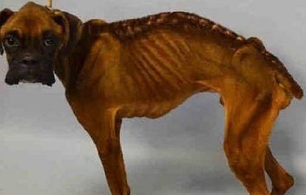 Brewster, el perro rescatado que llevaba meses sin comer