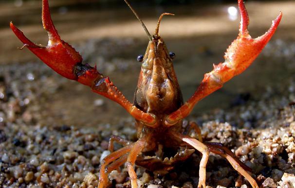 """""""Mucha participación"""" en la concentración de Isla Mayor en defensa del sector del cangrejo rojo"""