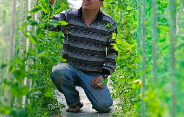 El caviar vegetal crece en Guipúzcoa