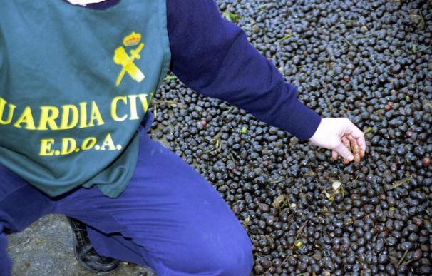 Diez rumanos detenidos por robar 1.700 kilos de aceituna en Córdoba