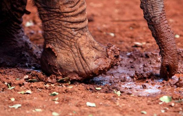 Intermón alerta de que la sequía puede causar diez millones de muertos en África