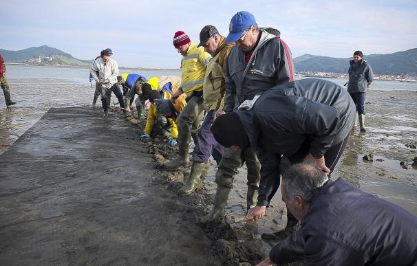Pesca confía en levantar la veda de la almeja en la Bahía de Santander a principios de 2018