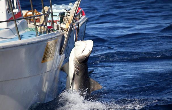 Una mujer muere en un ataque de un tiburón en el sureste de Australia