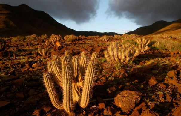 Fuerteventura destina 400.000 euros a la lucha contra la desertización de Cofete