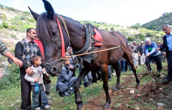Los palestinos conmemoran hoy el Día de la Tierra, en protesta por las expropiaciones