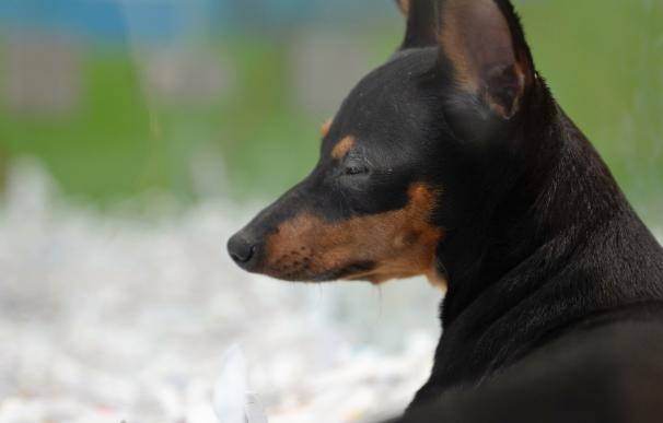 """Equo denuncia las """"malas condiciones"""" en el transporte de cachorros desde Europa del Este y pide más controles"""