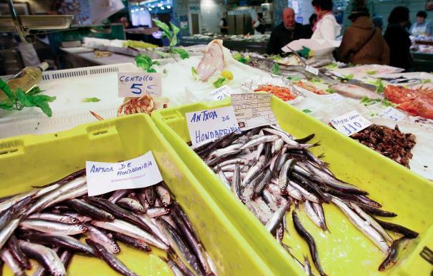 Los pescadores del Cantábrico acuerdan no pescar anchoa esta semana