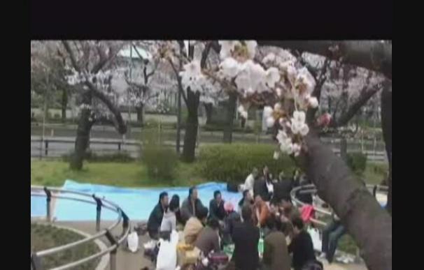"""Las bajas temperaturas prolongan la celebración del """"sakura"""""""