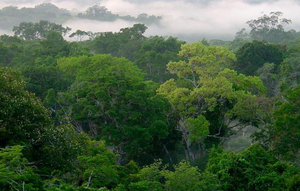 Reclaman una gestión sostenible de los bosques en el Día Forestal Mundial 2010