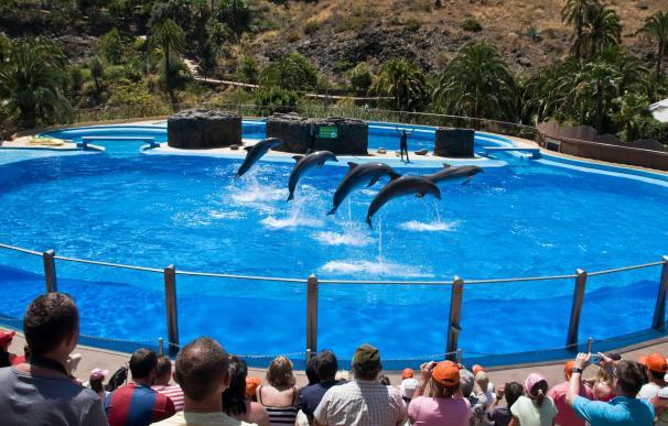 El TSJC declara nulo el acuerdo que recoge como estratégico el delfinario de Palmitos Park, en Gran Canaria