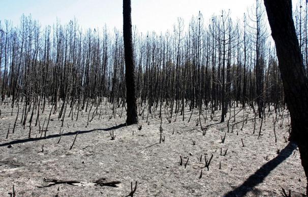 Controlado un incendio en Salamanca que ha arrasado 181 hectáreas de arbolado