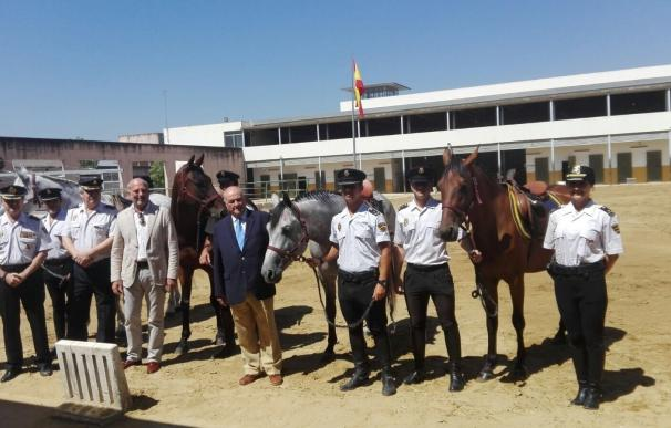 La Policía Nacional recibe de manos de Antonio Rodríguez de la Borbolla un potro para la Unidad de Caballería