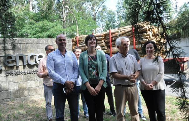 """El BNG pide a la Xunta """"un acuerdo de país"""" para cambiar la política forestal y frenar """"el monocultivo de eucalipto"""""""