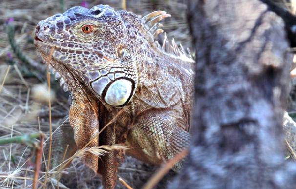 Uno de los animales del Centro de Recuperación de Animales Silvestres