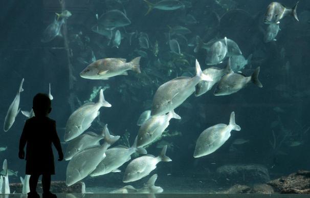 Los peces pueden comunicarse entre sí con sonidos, según un experto neozelandés