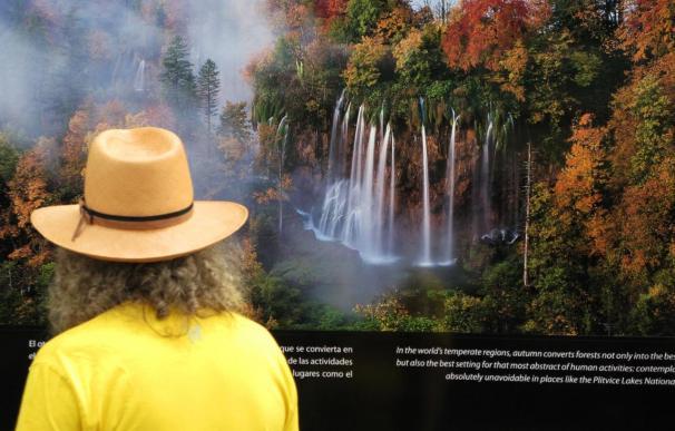 Un lector mira la exposición Bosques del Mundo en la Feria del Libro de Madrid