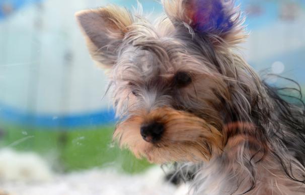 Un total de 2.216 animales fueron adoptados en 2015 y otros 1.024 fueron recuperados por sus dueños en Madrid