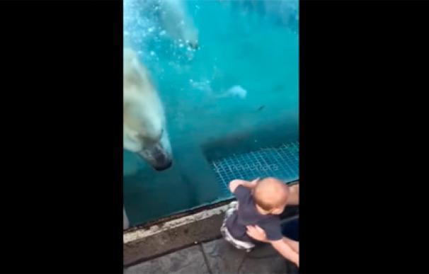 El susto de este bebé cuando un oso polar intenta 'probarle' en un zoológico