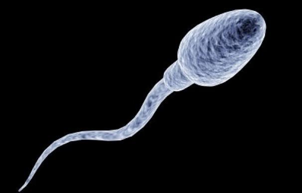 Identifican alteraciones en la cola del espermatozoide que podría ayudar a determinar la calidad del semen