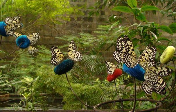 Alas de mariposa convertidas en arte en Filipinas