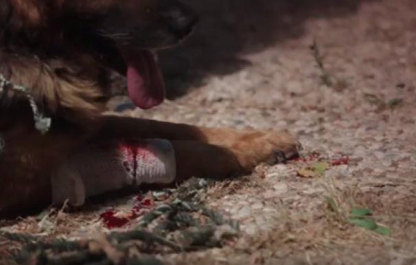 'Yo sí puedo contarlo':: la campaña de la Guardia Civil para denunciar el maltrato animal