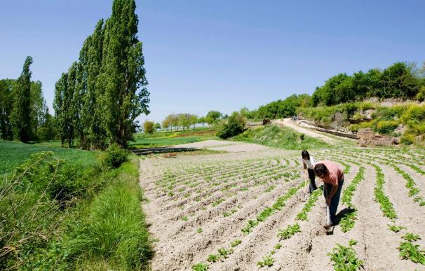 España gastó 6.835 millones del presupuesto agrícola de la UE en 2009