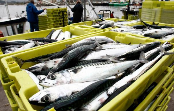 La Xunta consensúa con los pescadores el decreto de permisos de explotación