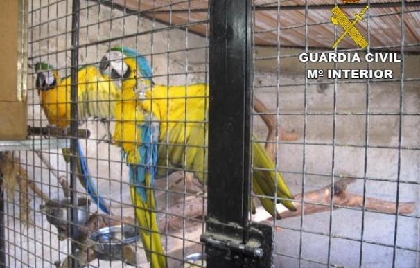 Localizan un criadero ilegal de aves exóticas protegidas en Bigues i Riells (Barcelona