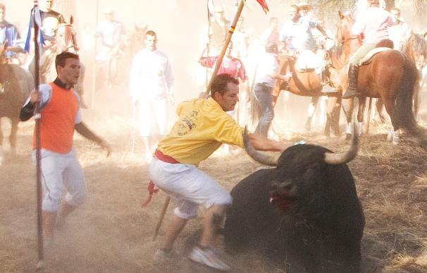 El desencierro del 'Toro de la Peña' sustituirá al 'Toro de la Vega' en Tordesillas (Valladolid)