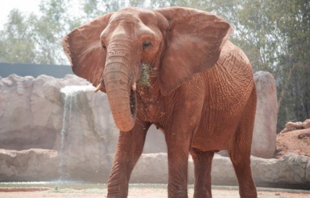 Un elefante del zoo lanza una piedra que acaba con la vida de una niña de siete años