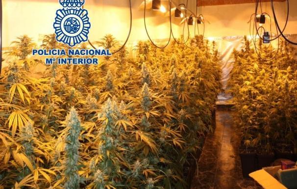 Dos detenidos y desmantelada una plantación de marihuana en una vivienda en Granada