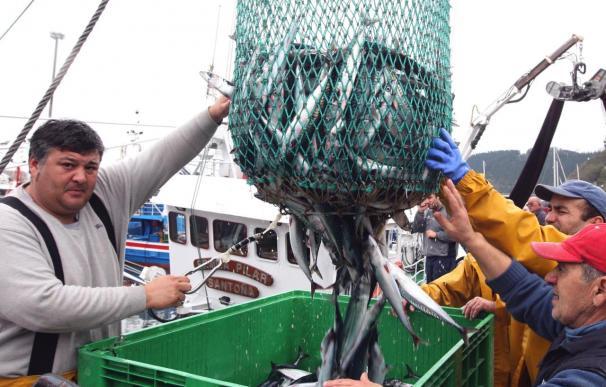 La CE apoya aumentar a 1.300 toneladas la cuota de bacaladilla del Cantábrico