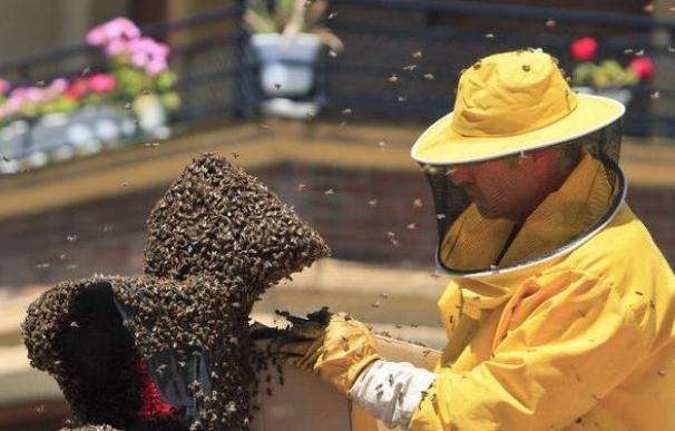 Las abejas, en serio peligro de extinción